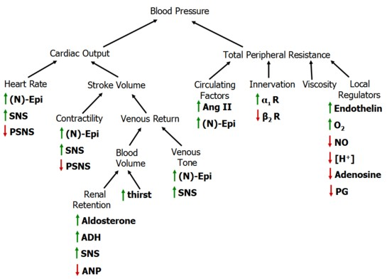 how is blood flow related to pressure and resistance relationship