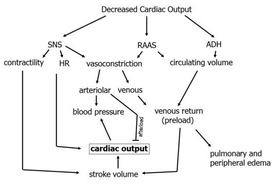 Cardiac Output